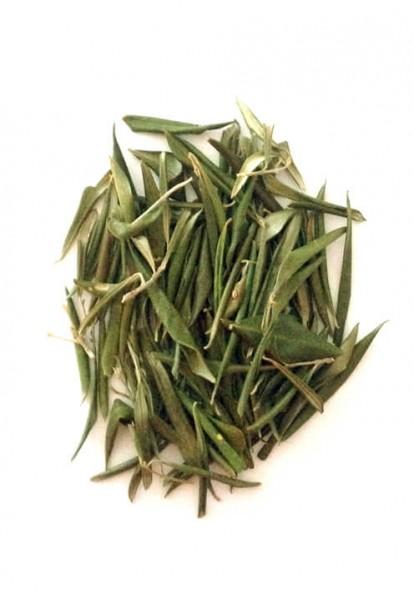Olivenblätter aus Griechenland (Amorgos)