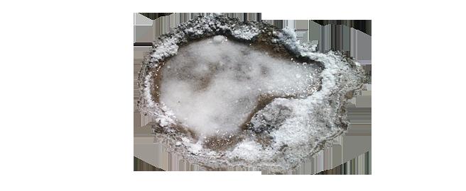 salzgarten-kretas